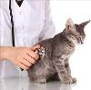 Ветеринарные клиники в Дальнегорске